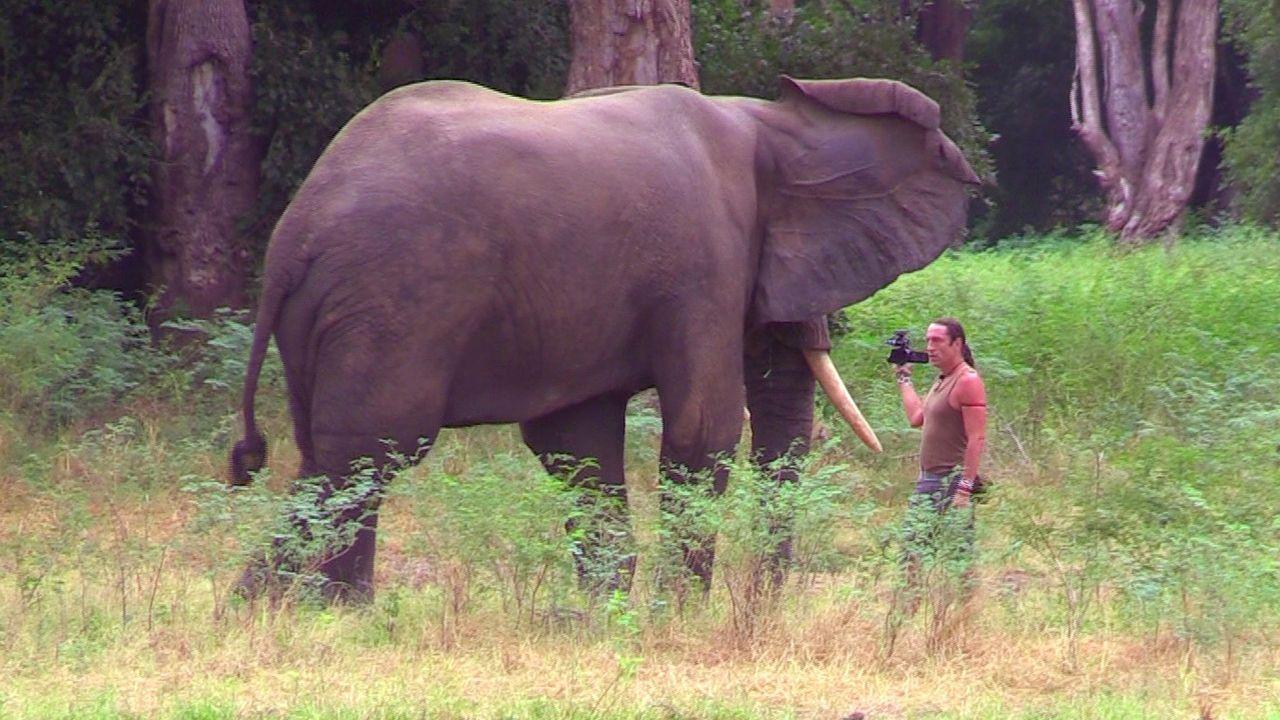 Elefantenbulle-direkt-vor-Richard-Gress - Bildquelle: kabel eins