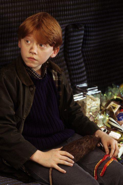 In Ron Weasley (Rupert Grint) findet Harry Potter einen richtig guten Freund, der ihm bei allen Problemen mutig beisteht ... - Bildquelle: Warner Bros. Pictures