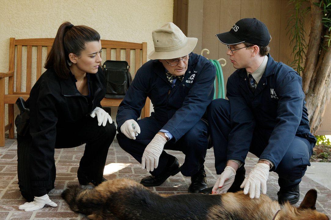 Kümmern sich um den Schäferhund, den McGee in Notwehr angeschossen hat: Ziva (Cote de Pablo, l.), Ducky (David McCallum, M.) und Jimmy (Brian Dietze... - Bildquelle: CBS Television