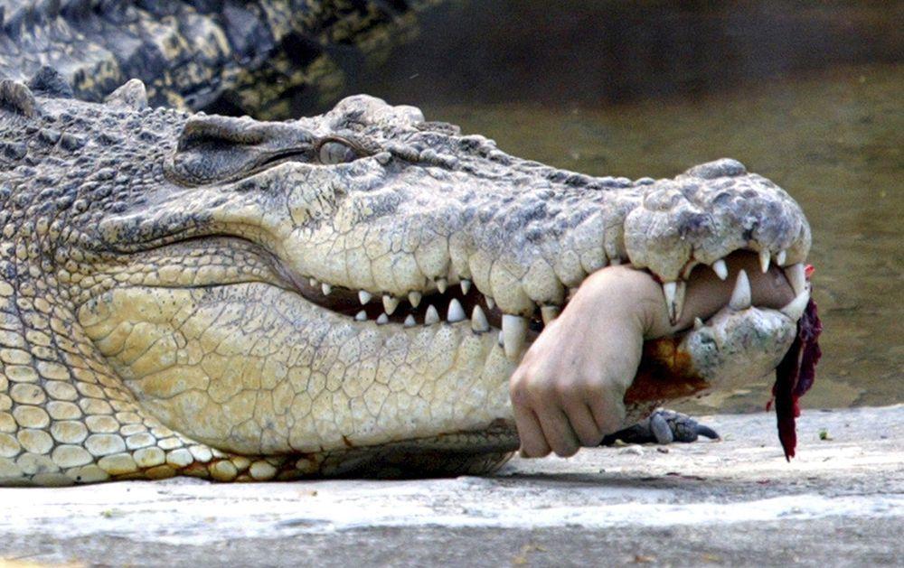 Krokodil mit Arm
