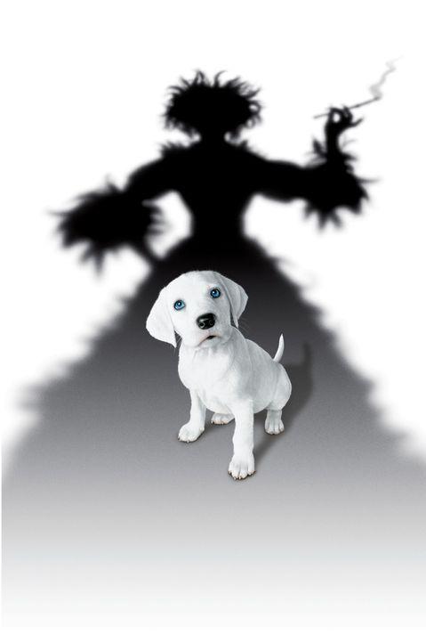 Cruella de Vil ist zurück und ist wieder auf der Jagd nach den süßen Vierbeinern ... - Bildquelle: Walt Disney Pictures