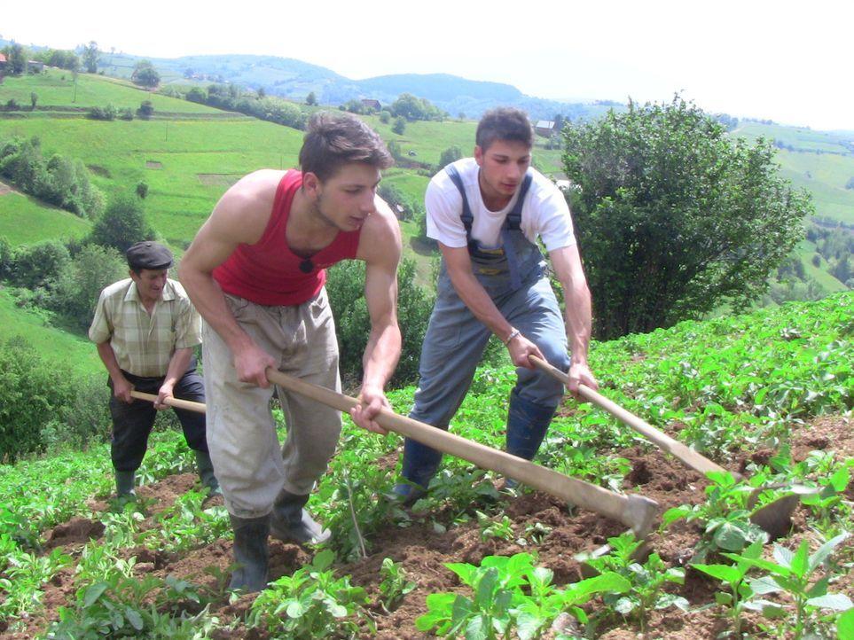 Bei ihrer Gastfamilie in Rumänien sollen die Zwillingsbrüder Maurizio und Guiseppe (vorne) lernen, was es bedeutet, Verantwortung zu übernehmen ... - Bildquelle: SAT.1