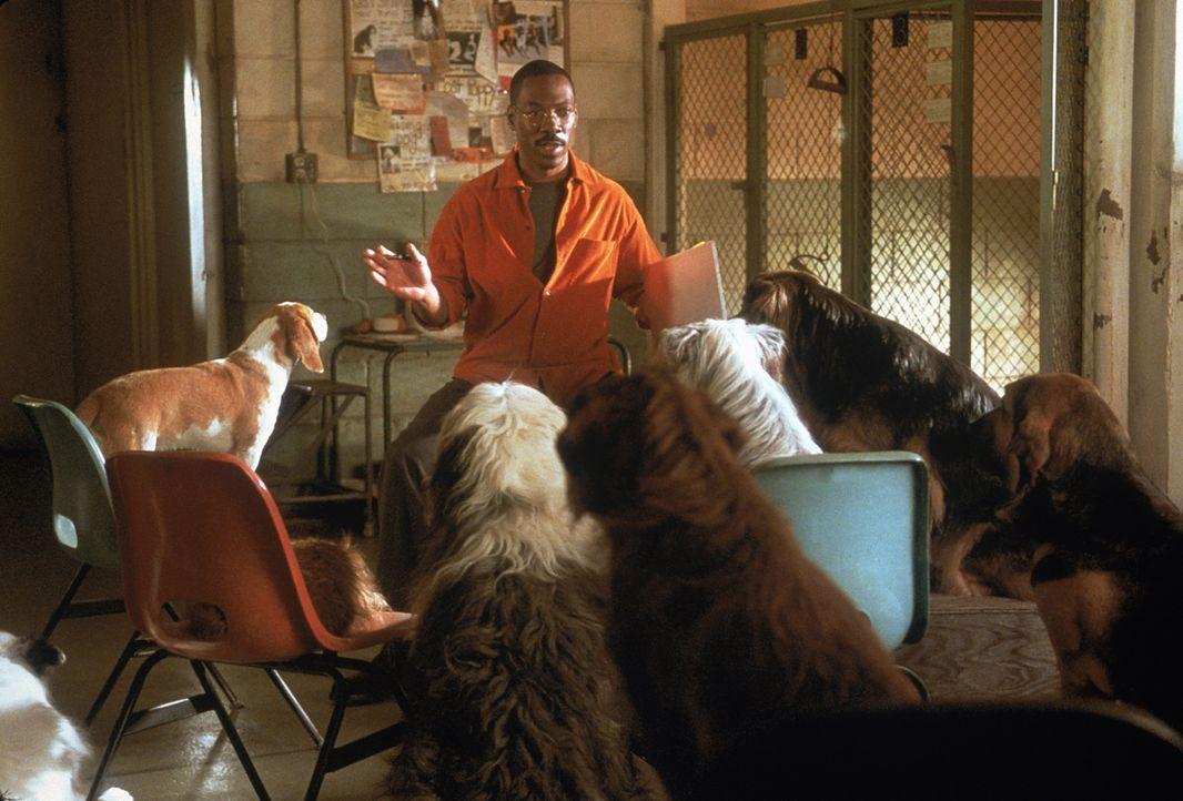 Dr. Dolittle (Eddie Murphy) versammelt alle Tiere um sich, die er finden kann, um sie zu einer gemeinschaftlichen Waldrettungs-Aktion aufzurufen ... - Bildquelle: 1998 Twentieth Century Fox Film Corporation. All rights reserved.