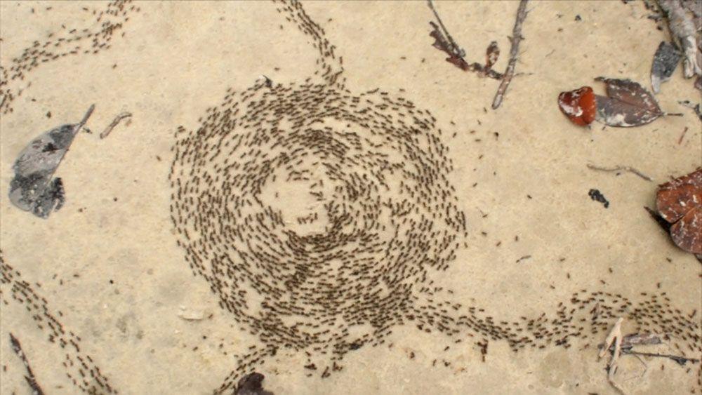 Ameisenmühlen - Bildquelle: Shutterstock