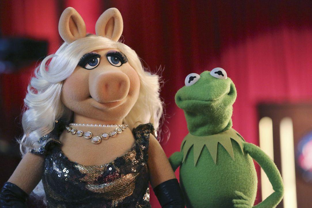 Da der Geburtstag von Kermits (r.) Freundin Denise vor der Tür steht, braucht er noch ein Geschenk. Er bittet Miss Piggy (l.) um Hilfe. Doch ist das... - Bildquelle: Carol Kaelson ABC Studios