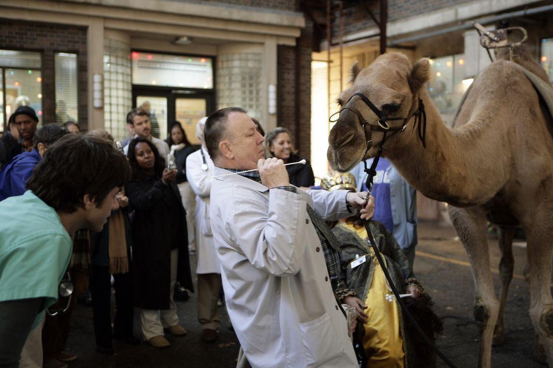 Um eine Kultur anlegen zu können, damit eine gezielte Therapie bei Dubenko gegeführt werden kann, muss nach dem Kamelbiss eine Speichelprobe genom... - Bildquelle: Warner Bros. Television