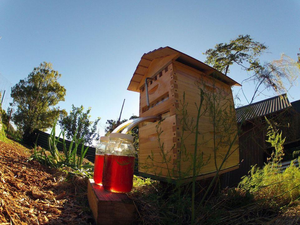 """Gezapft, nicht geschleudert, bitte. Ein Bienenstock mit Zapfhahn ist das Ergebnis der Crowd-Funding-Kampagne """"Honey Flow"""" in Australien ... - Bildquelle: Honeyflow.com"""