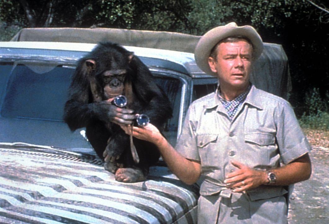 Immer wieder muss Dr. Marsh Tracy (Marshall Thompson) erleben, dass seine freche Schimpansin Judy diverse kleine und große Katastrophen auslöst ... - Bildquelle: 2007 Warner Bros. All Rights Reserved.