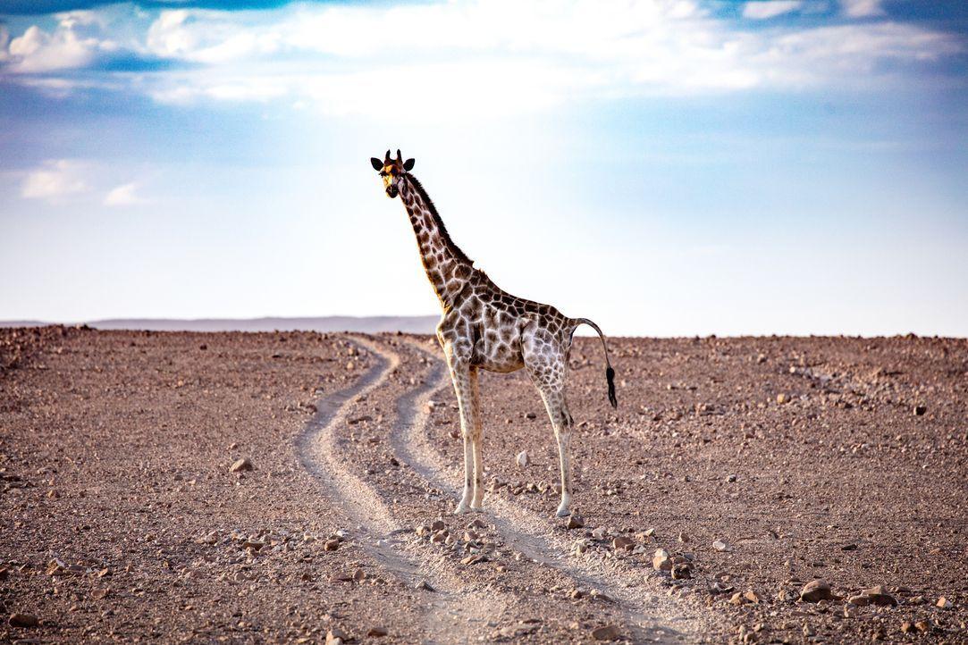 Seine nächste Reise führt Bill Weir nach Botswana. Dort geht er den Folgen des Safari-Tourismus' nach. Da die Touristen nicht nur die Schönheit der... - Bildquelle: Bill Weir 2016 Cable News Network. A Time Warner Company. All Rights Reserved.