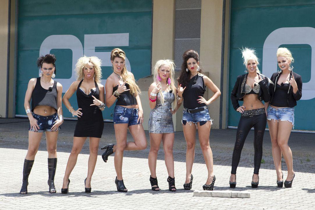 Die Beauties (V.l.n.r.): Kamilla, Jacqueline, Pia, Martina, Siw, Kimberly, Anissa - Bildquelle: Charlie Sperring ProSieben