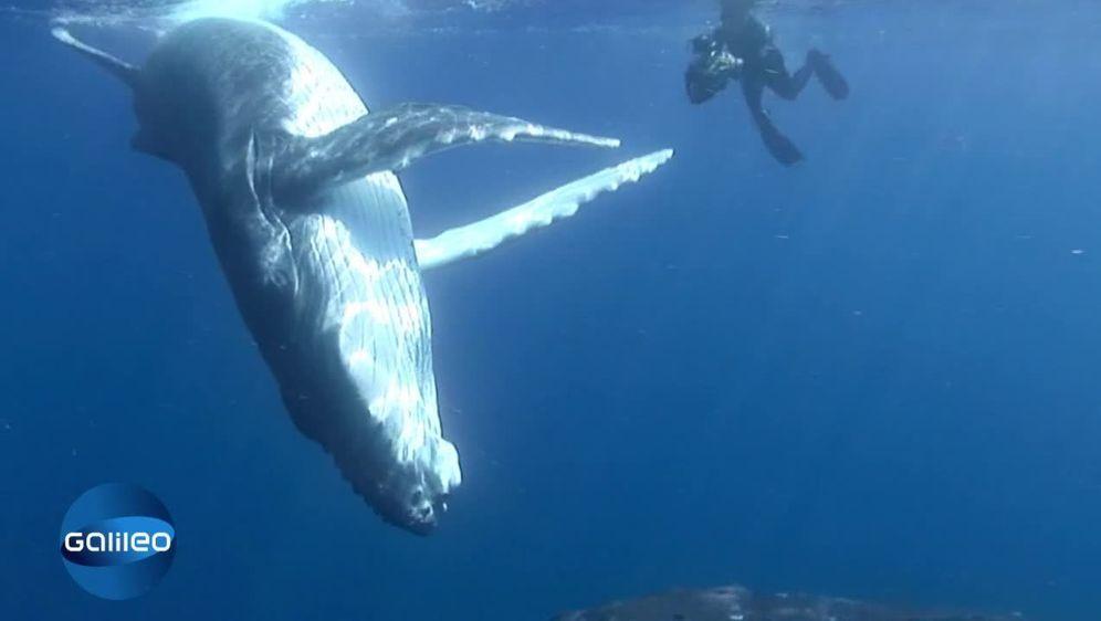Gedanken zum Wal