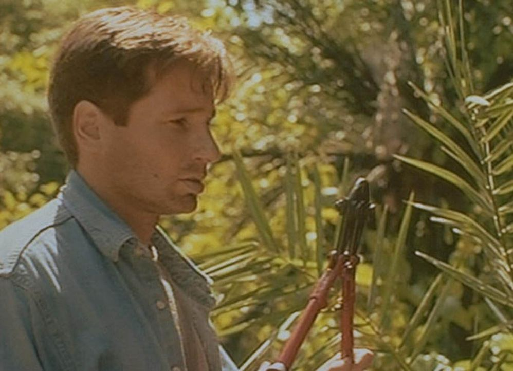 Mulder (David Duchovny) dringt auf seiner Suche nach geheimnisvollen Botschaften aus dem Weltraum zu einem verlassenen Radioteleskop im Dschungel vo... - Bildquelle: TM +   2000 Twentieth Century Fox Film Corporation. All Rights Reserved.