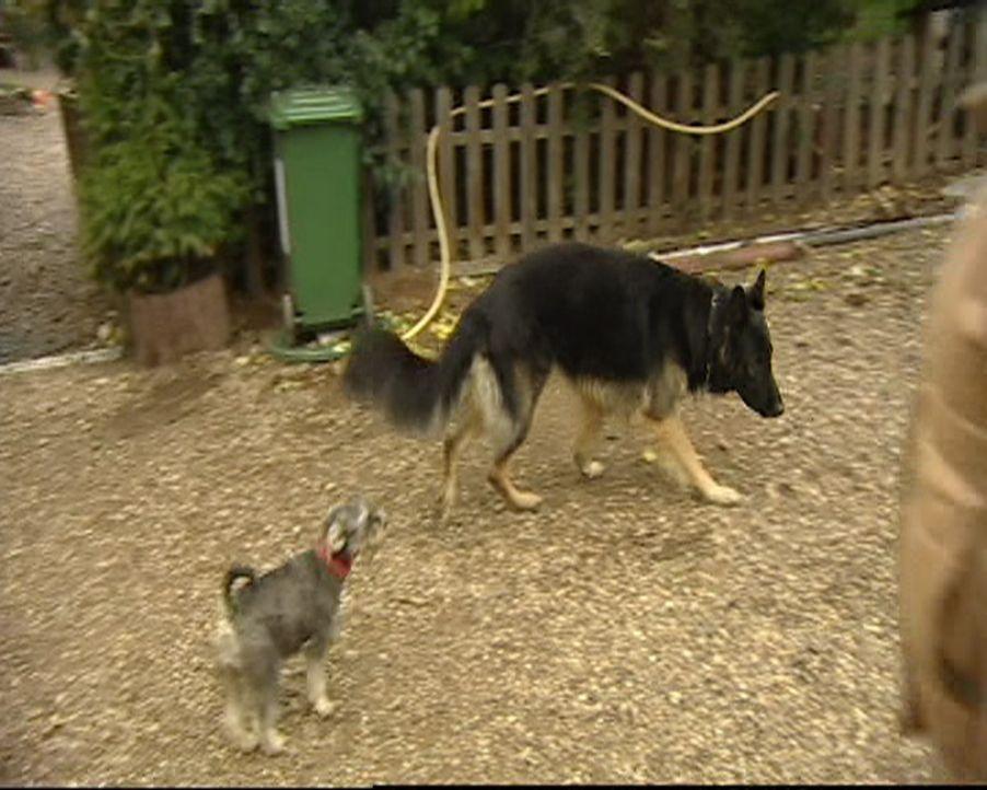 Familie Kosanke hat Probleme mit ihrem Hund (r.). Kann der kleine Artgenosse helfen? - Bildquelle: SAT.1 Gold
