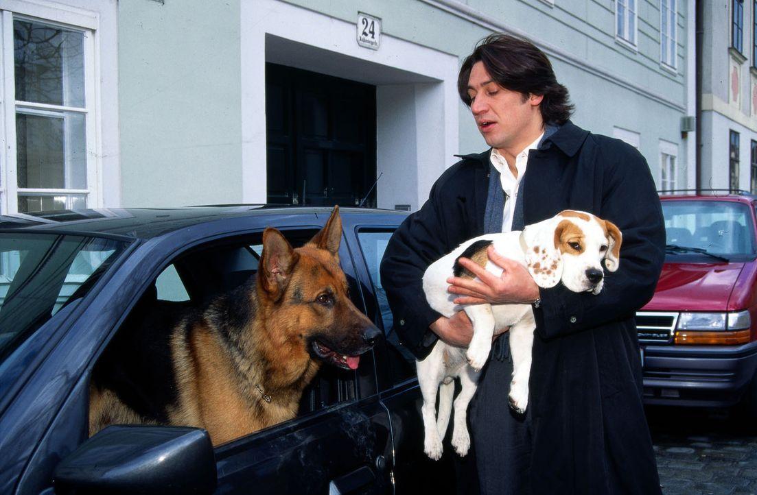 Rex hat die Beagle-Hündin aufgespürt, die nach dem Tod des Professors aus dem Käfig in der Uni verschwand. Kommissar Moser (Tobias Moretti) nimmt da... - Bildquelle: Ali Schafler Sat.1
