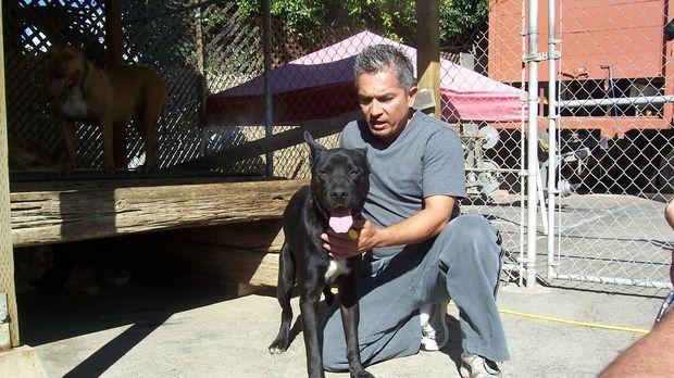 Cheri hat sich drei Hunde aus ihrer Gruppe ausgesucht, die besonderer Hilfe b...