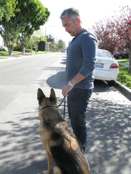 Cesar Millan (r.) betreut heute zwei Personen, die sich im Internet kennengelernt haben. Sie haben Angst, dass sich ihre Hunde nicht vertragen und d... - Bildquelle: Neal Tyler MPH - Emery/Sumner Joint Venture