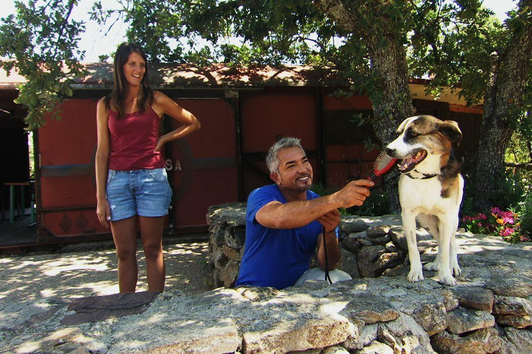 Können Cesar (r.) und Eva (l.) dem scheuen Brigadiere die Angst nehmen? - Bildquelle: Belén Ruiz Lanzas 360 Powwow, LLC / Belén Ruiz Lanzas