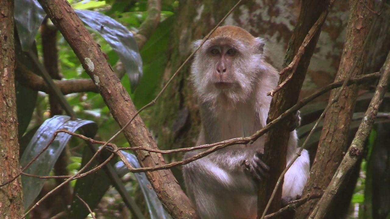 Sumatra 19 - Bildquelle: kabel eins