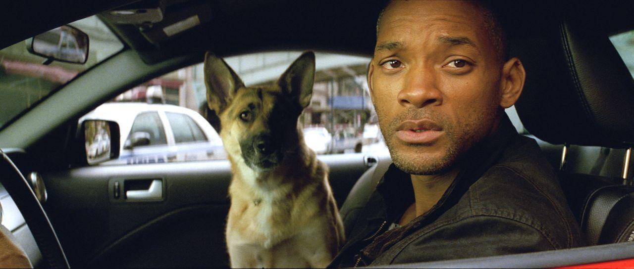 Allein gegen den Rest der Welt: Robert Neville (Will Smith) ... - Bildquelle: Warner Brothers International