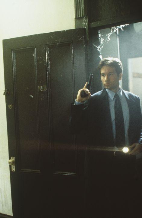 Der FBI-Agent Fox Mulder (David Duchovny) untersucht eine mysteriöse Mordserie in Baltimore. - Bildquelle: TM +   Twentieth Century Fox Film Corporation. All Rights Reserved.