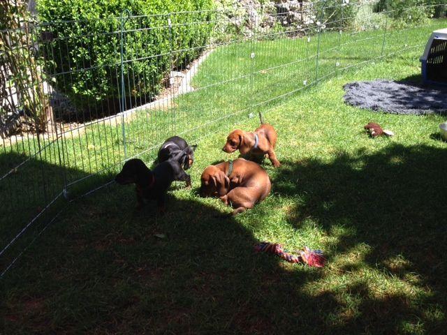 HundliegenimSchatten