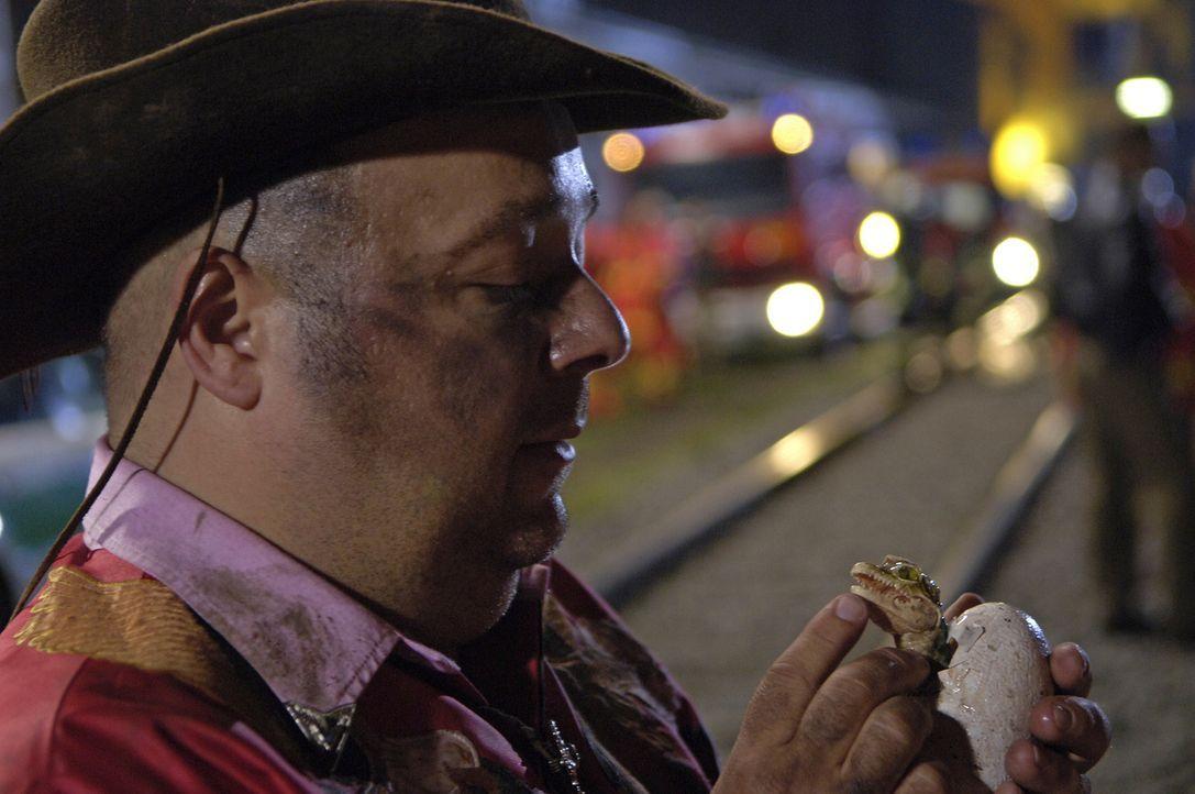 Das Krokodil ist tot. Es lebe das Krokodil! Unglücklicherweise rettet Bützje (Dirk Bach) ein Kroko-Ei vor der Vernichtung ... - Bildquelle: Laurent Trümper ProSieben