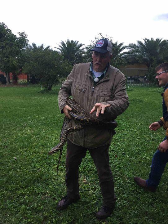 Florida wird seit geraumer Zeit von einer Python Plage bedroht und diese macht auch vor dem Pferdeflüsterer und Tierchiropraktiker nicht halt. Kann... - Bildquelle: kabel eins