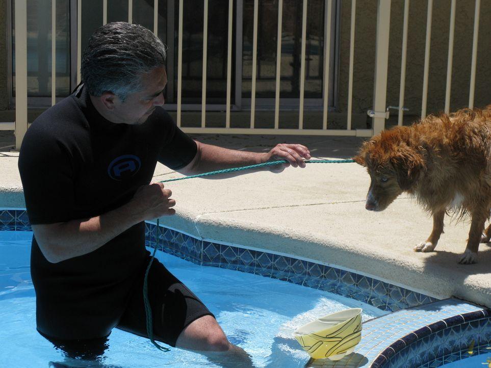 Der Hundeflüsterer Cesar Millan kümmert sich unter anderem um die kanadische Retrieverdame, die panische Angst vor Wasser hat. - Bildquelle: Rive Gauche Intern. Television