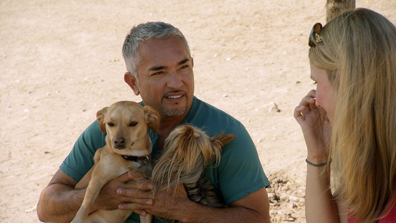 Cesar (l.) versucht Holly klar zu machen, warum ihr Hündin auf andere Hunde so aggressiv reagiert und zeigt dem Frauchen, mit welchen Methoden ihre... - Bildquelle: NGC/ ITV Studios Ltd