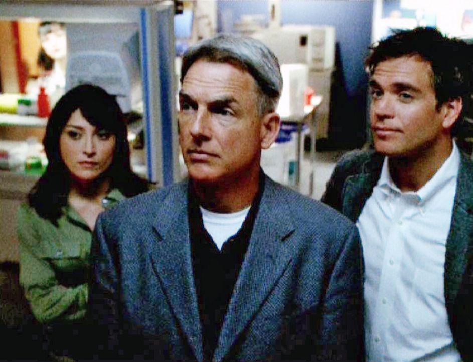 Nachdem ein ermordeter Marine in einem Waldstück gefunden wurde, stoßen Special Agent Leroy Gibbs (Mark Harmon, M.) und sein Team um Caitlin Todd... - Bildquelle: CBS Television