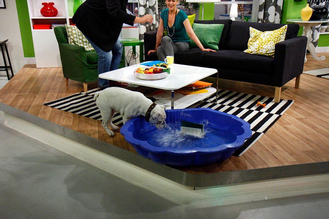 fruehstuecksfernsehen-studiohund-lotte-in-action-im-studio-097 - Bildquelle: Ingo Gauss