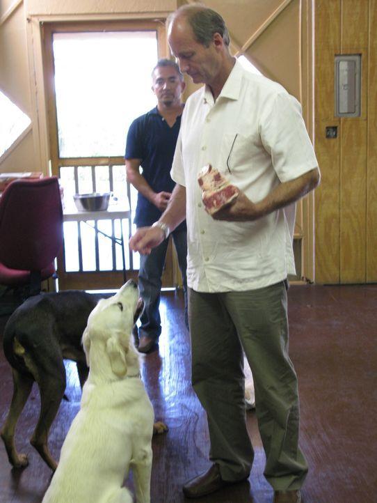 Familie Murray hat große Probleme mit ihrem Golden Retriever Cricket. Lyndon (r.) wurde sogar vor kurzem von dem Hund angegriffen. Kann der Hundeflü... - Bildquelle: Rive Gauche Intern. Television