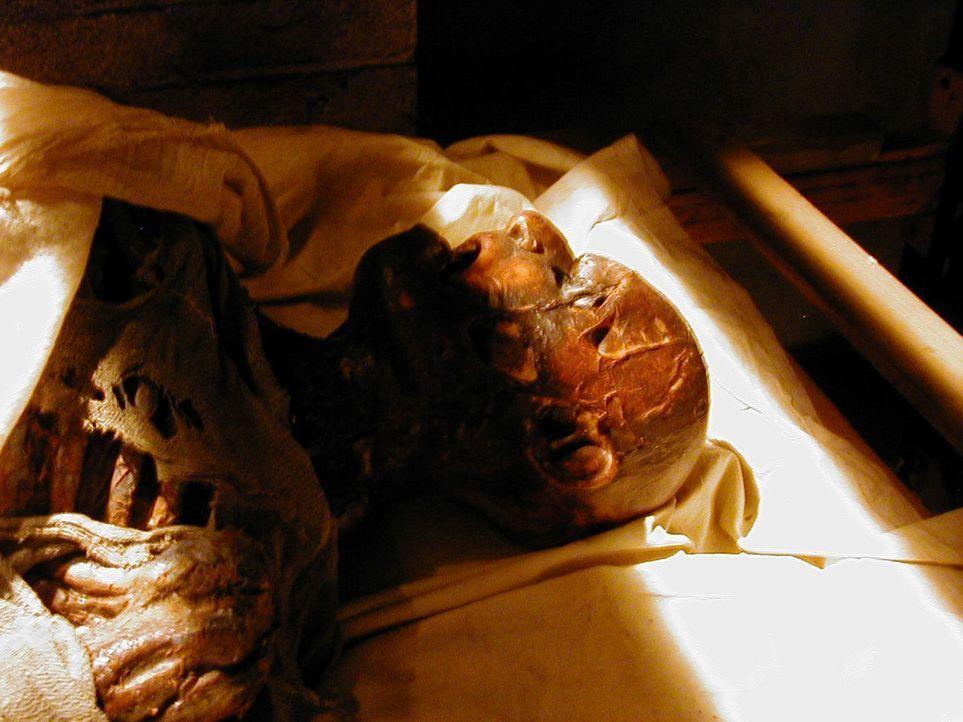 Für die Paläontologie ein gefundenes Fressen: Obduktion eines vor urdenklichen Zeiten Verstorbenen ...
