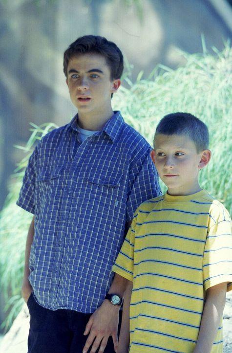 Dewey (Erik Per Sullivan, r.) und Malcolm (Frankie Muniz, l.) stehen im Tigergehege plötzlich den Bewohnern gegenüber und hoffen auf schnelle Rett... - Bildquelle: TM +   Twentieth Century Fox Film Corporation. All Rights Reserved.