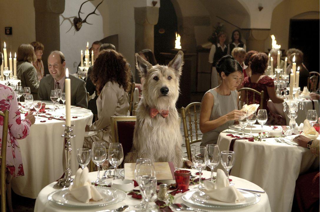 Nach dem Tod seiner Mutter, wünscht sich Max nichts sehnlicher als einen Hund. Ob sein Wunsch in Erfüllung geht? - Bildquelle: Constantin Film Verleih GmbH