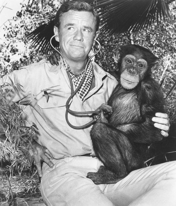 Immer wieder wollen die Schimpansin Judy und der schielende Löwe Clarence Dr. Marsh Tracy (Marshall Thompson) und dem Team helfen, lösen dabei aber... - Bildquelle: 2007 Warner Bros. All Rights Reserved.