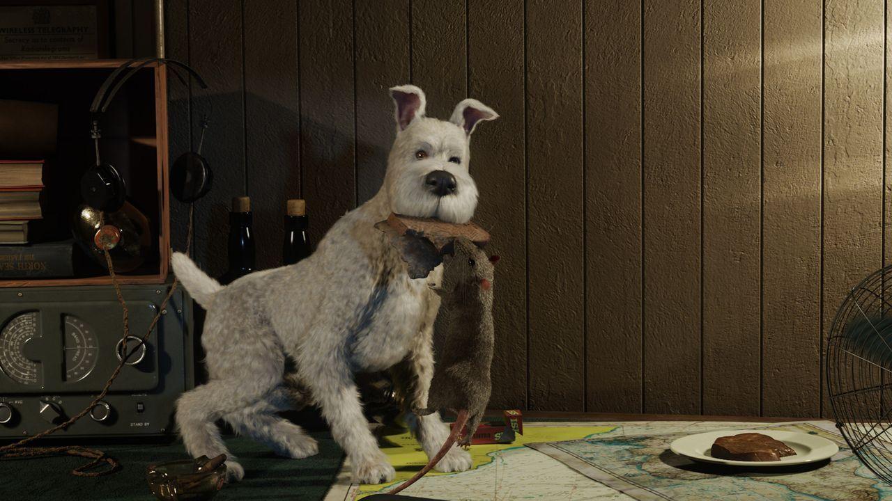 Was würde Tim nur ohne seinen treuen Gefährten Struppi machen? Der kleine Hund hat ihm schon oft aus der Patsche geholfen - wird es ihm auch diesmal... - Bildquelle: 2011 Columbia Pictures Industries, Inc., DW Studios L.L.C. and Hemisphere - Culver Picture Partners I, LLC. All Rights Reserved.