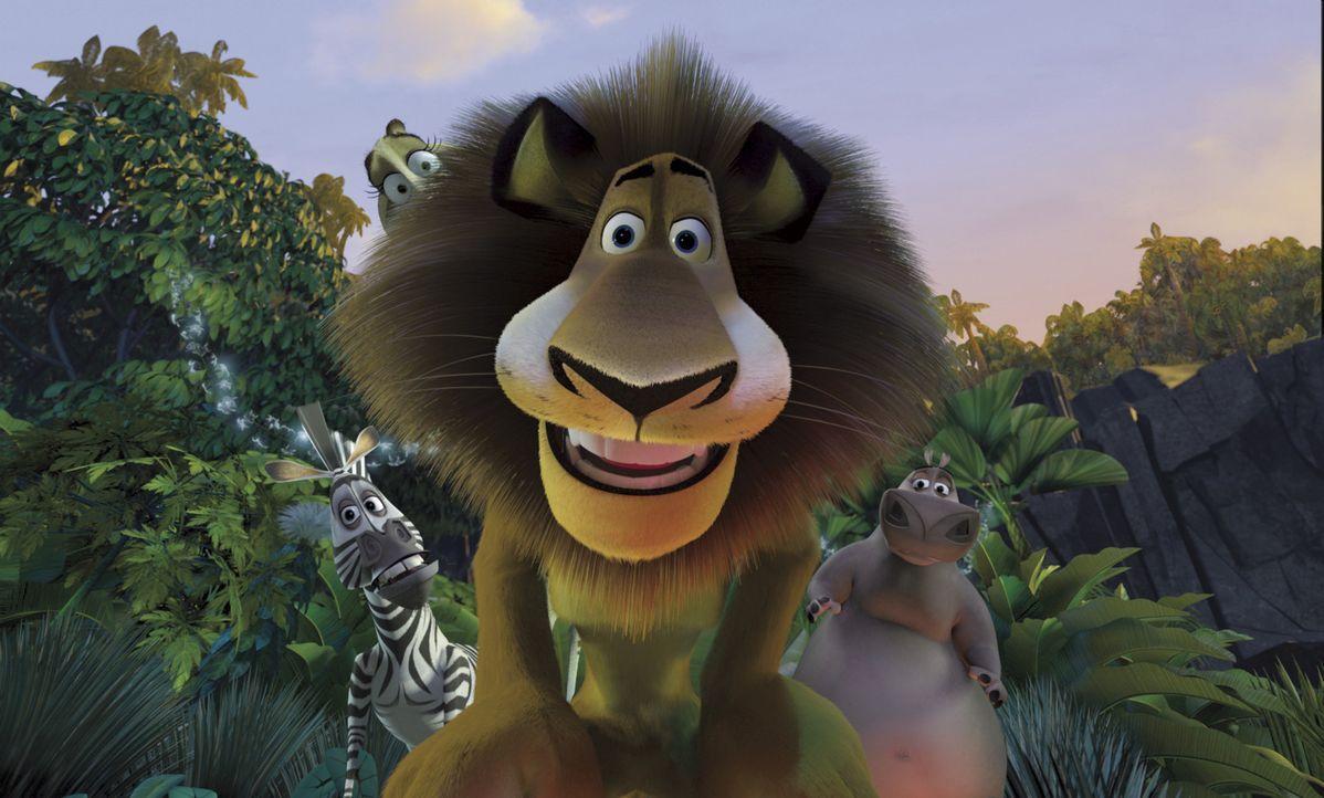 Die Gesetze des Dschungels sind anders als die Regeln, die unsere großstädtischen Zoobewohner bisher so gewohnt waren - und definitiv zuviel Natur... - Bildquelle: TM &   2004 DREAMWORKS ANIMATION SKG.
