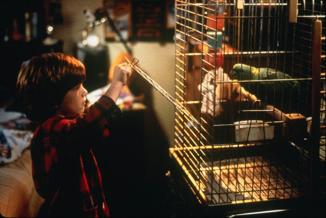 Der gewitzte Alex Pruitt (Alex Linz) hat immer wieder neue Streiche auf Lager ... - Bildquelle: 1997 Twentieth Century Fox Film Corporation. All rights reserved.