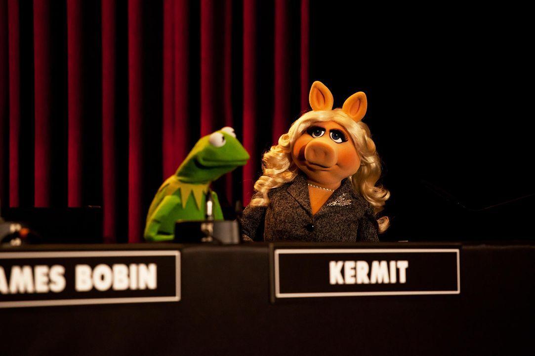 muppets-pressekonferenz-berlin-06-hanna-boussouar-walt-disney-companyjpg 1900 x 1267 - Bildquelle: Hanna Boussouar/Walt Disney Company