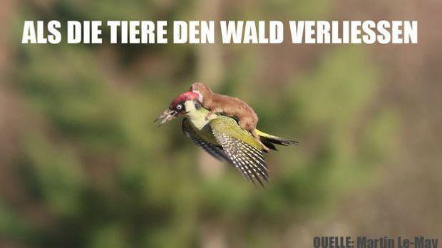 WieselPecker_FB