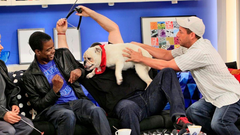 fruehstuecksfernsehen-studiohund-lotte-in-action-im-studio-067