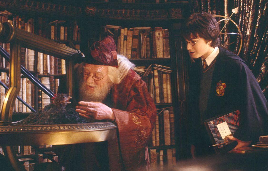 Muss neben dem Schulalltag auch noch die Welt der guten Zauberer und Hexen vor dem Untergang bewahren: Harry Potter (Daniel Radcliffe) ... - Bildquelle: Warner Bros. Pictures
