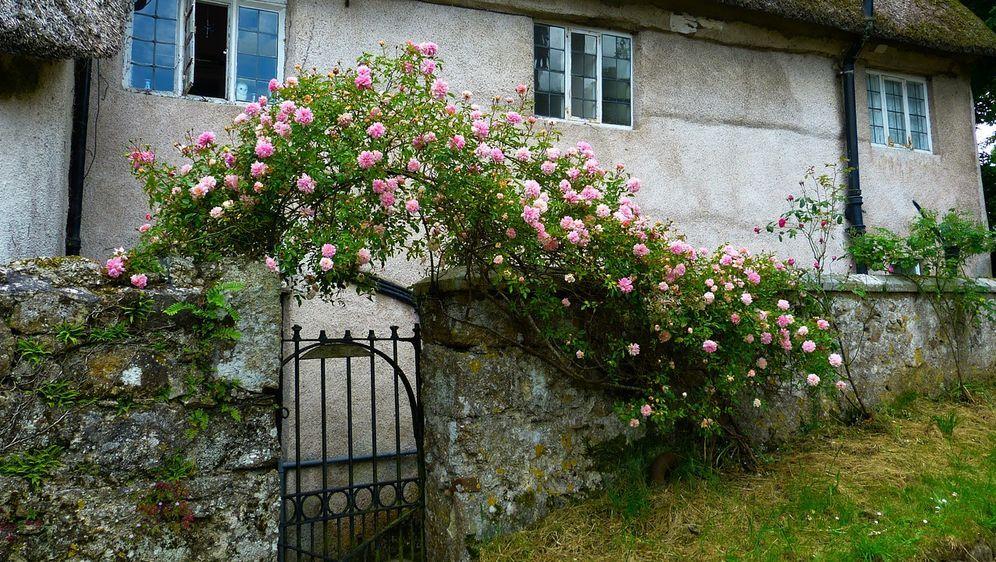 Rosenbogen Selber Bauen Oder Kaufen Sat 1 Ratgeber