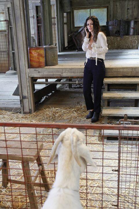 Zoes (Rachel Bilson) Angst vor dem tobenden Sturm ist größer als die vor der Ziege und eigentlich ist es doch ganz schön in der Scheune ... - Bildquelle: Warner Bros.