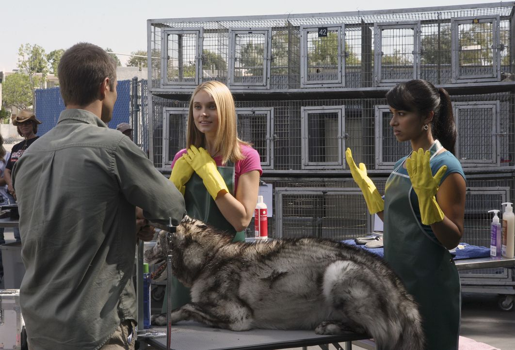Bei den Projektwochen im Tierheim lernt Casey (Spencer Grammer, M.) Jonah (Jerad Anderson, l.) kennen. Als sie von ihm erfährt, dass Rebecca (Dilsha... - Bildquelle: ABC Family
