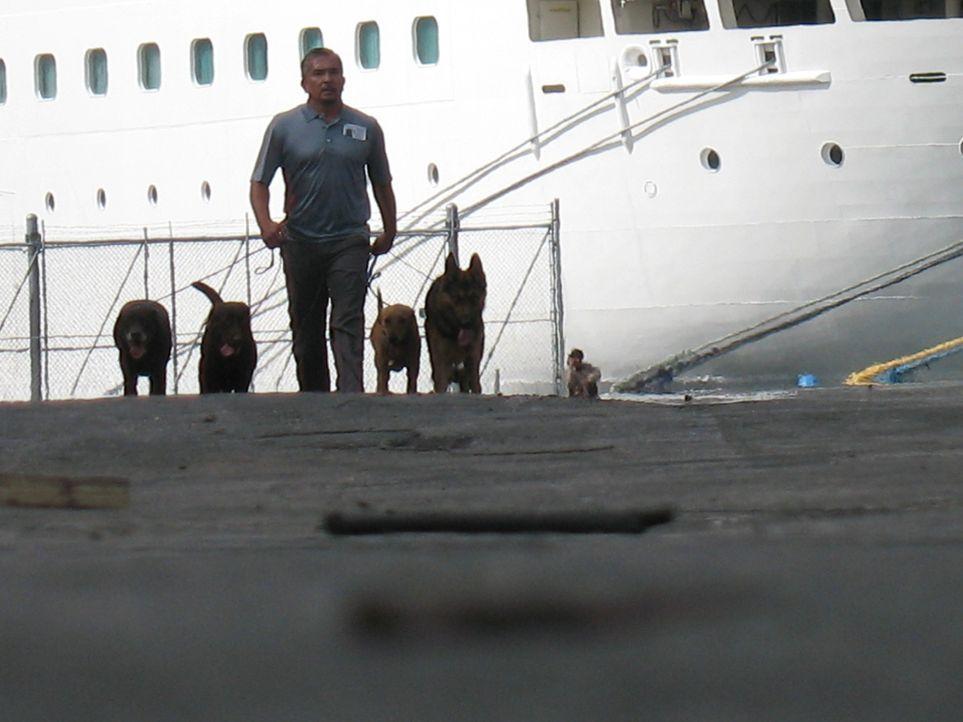 Der Hundeflüsterer Cesar Millan soll das Sozialleben einer Hundestaffel beleben. Normalerweise suchen die Vierbeiner am Hafen nach Drogen und Spreng... - Bildquelle: Rive Gauche Intern. Television