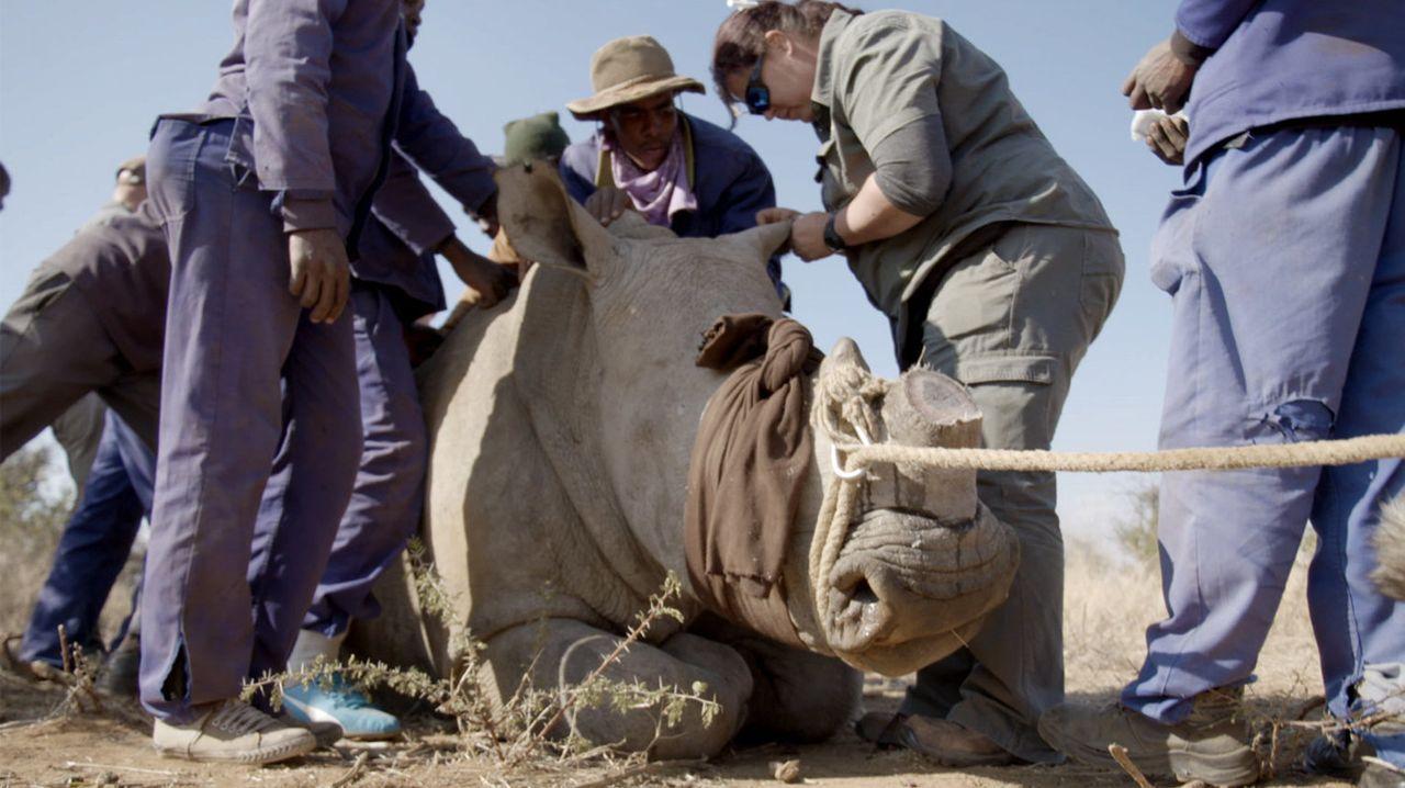Thilo Mischke reist nach Südafrika und Indonesien, um sich das Geschäft mit einigen der bedrohten Tierarten selbst anzuschauen. Wer profitiert? Wer... - Bildquelle: ProSieben