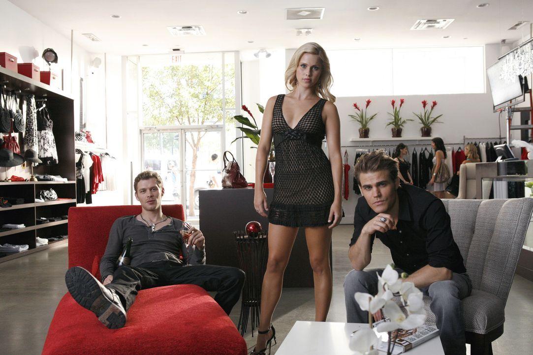 Machen die Boutiquen in Chicago unsicher: Rebekah (Claire Holt, M.), Stefan (Paul Wesley, r.) und Klaus (Joseph Morgan, l.) ... - Bildquelle: 2011 THE CW NETWORK, LLC. ALL RIGHTS RESERVED.