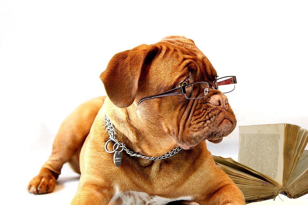 dog-734689_1280 - Bildquelle: Pixabay